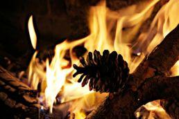 Holz und Tannenzapfen in Flamen
