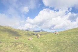 Header - Blauer Himmel Wiese mit Kühen